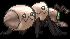 Sprite 632 chromatique dos XY.png