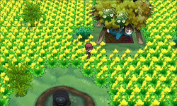 Village Pokémon XY.png