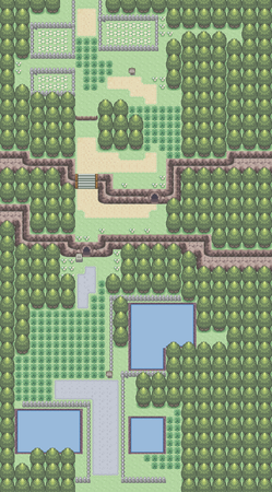 Route 204.png
