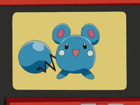 AG002 - Azurill Pokédex.png