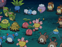 DP176 - Baudrive, Fouinette, Roucool, Hoothoot et Arakdo.png